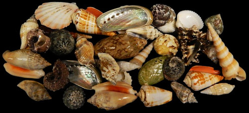 Special Philippine shell mix  (Large) 1 Kilo Approx 2+ lbs
