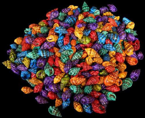 Dyed Nassa Phyrus Shells, craft shells Free Shipping  8 ounces