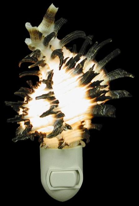 "Murex Longspine Nitelite Seashell Night lights 4"" Sold each"