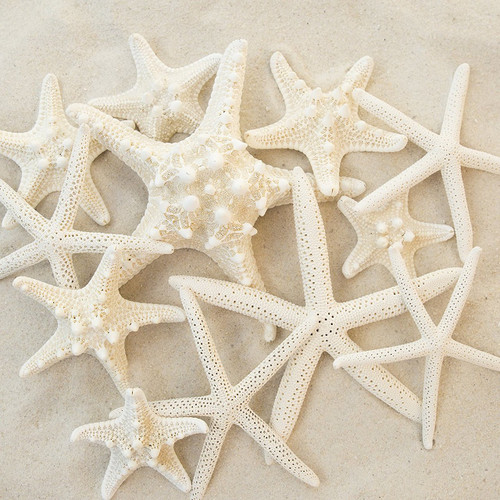 "Set of 12 Mixed White Starfish – Sizes Range From 2- 5"""