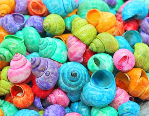 Dyed Cornball Shells, craft shells Free (Qty 50) Shipping