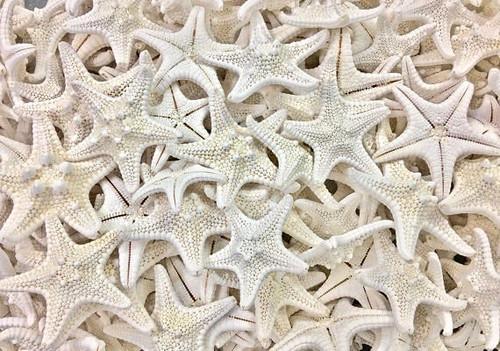 "Tiny White Knobby Starfish Set of 5 - 1""-2"" Beach Decor"