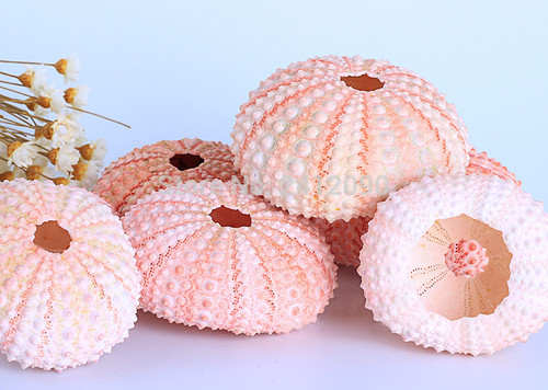"25 Natural Pink Sea Urchins 1.75"" - 2"" Nautical Beach Decor"