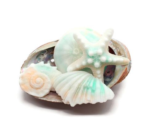 Shell Soaps, Ocean Mist  Scented Soap Set 4, 1 Abalone