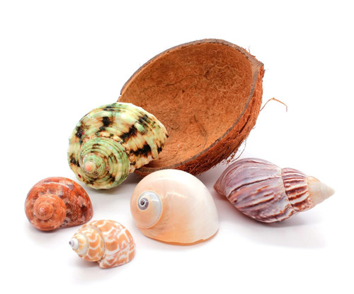 Hermit Crab Bowl Half Coconut Shell - 5 Hermit Crab Shells