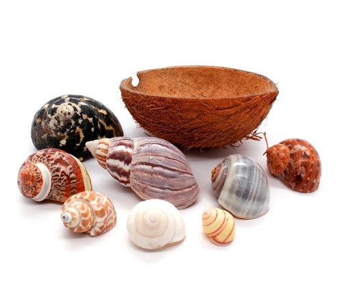 Hermit Crab Bowl Half Coconut Shell - 8 Hermit Crab Shells