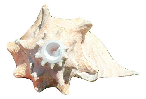 "Conch Shell Horn Shell 7-8"" Pink Queen Conch Shell Horn"