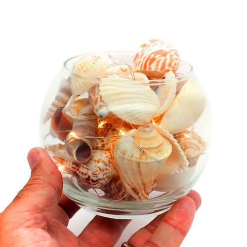 Assorted Natural Shells with Glass Bowl, LED Fairy Lights
