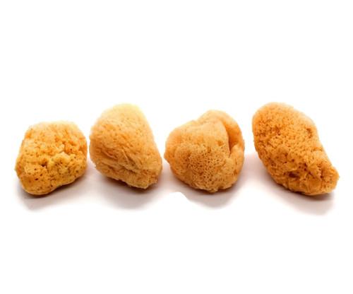Hermit Crab Sea Sponges, 4-Pack  (All Natural Hermit Crab Sponge)