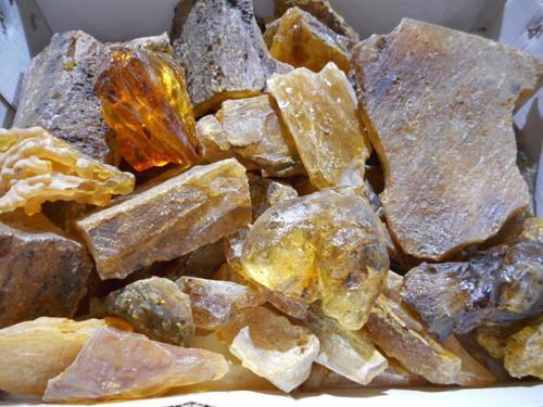 "Quality Pleistocene Copal, Amber Bulk 5lbs size 2-8"""