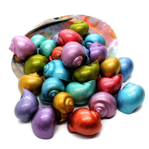 Dyed Metallic Large Apple Snail Coated Seashells