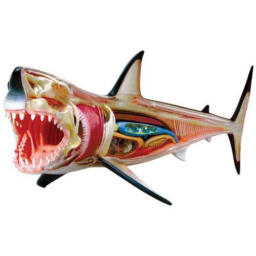 Great White Shark Anatomy Model 4D Puzzle