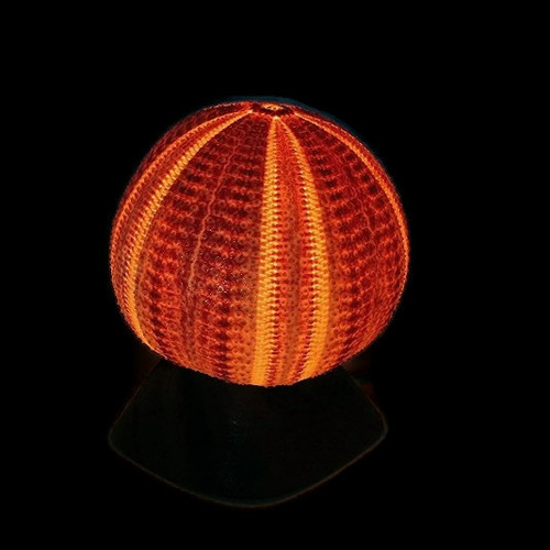 """Giant English Channel Sea Urchin Lamp Shell 6"""" with Wood Base"""