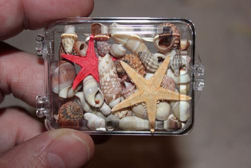 Acrylic Box of Assorted Small Shells and Starfish