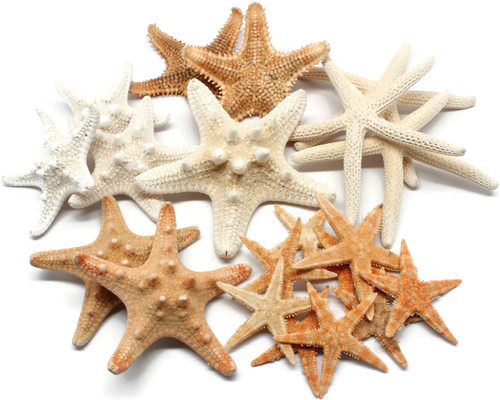 20 pcs Mixed Starfish, Free Shipping