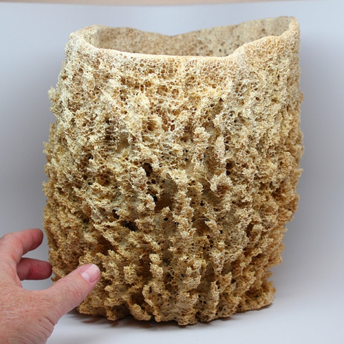 "Large Sea Cap Vase Sponge 9""-11"""