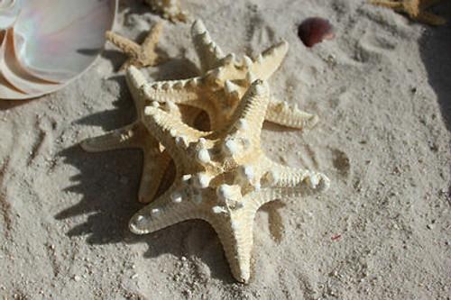 """White Knobby Starfish 3""""-5"""" Case pack 3"""