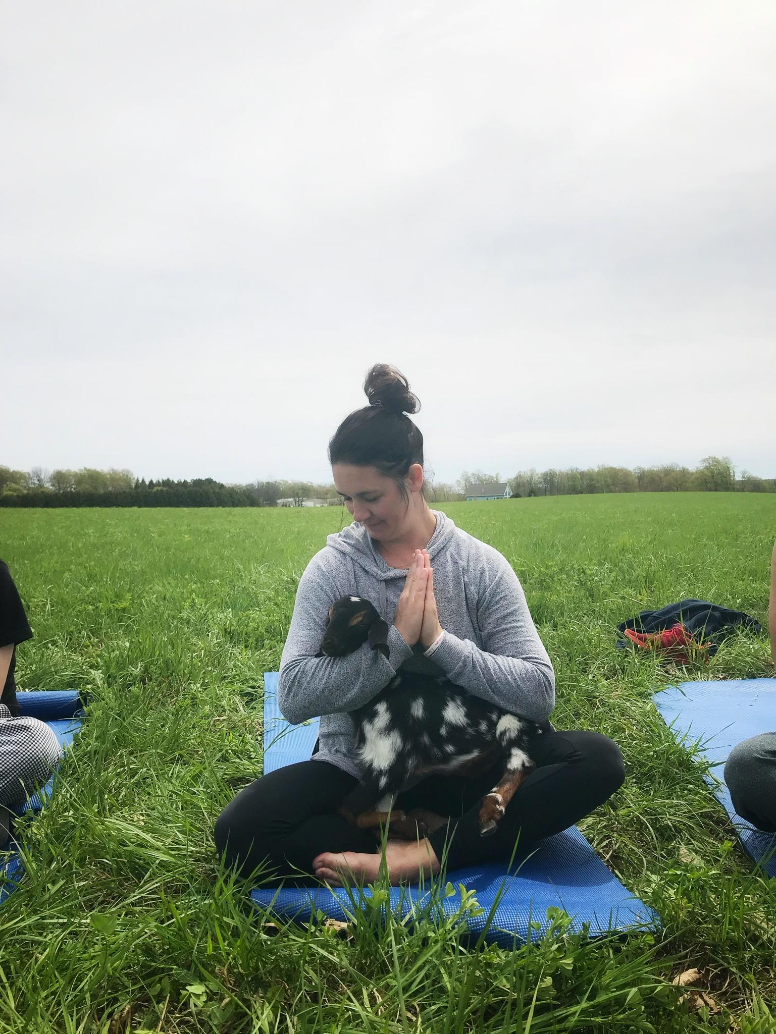Namaste Goat Yoga