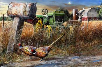 Pheasants by Kevin Daniel