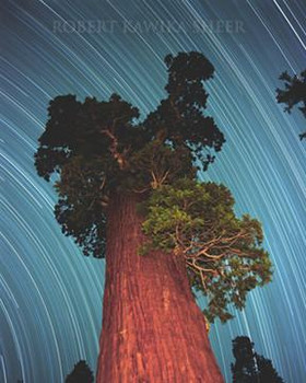 GIANT SEQUOIA STAR-TRAIL Metal Sign