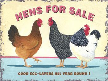 Hens For Sale Metal Sign