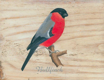 Bullfinch Metal Sign