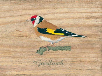 Goldfinch Metal Sign