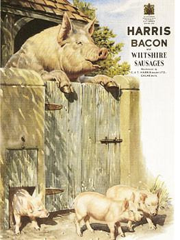 Harris Bacon