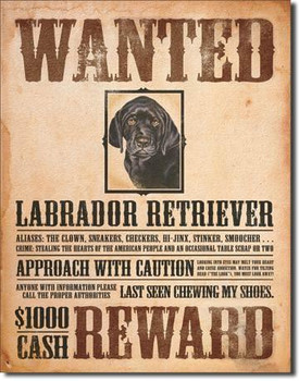 Black Lab Wanted Poster (DISC)