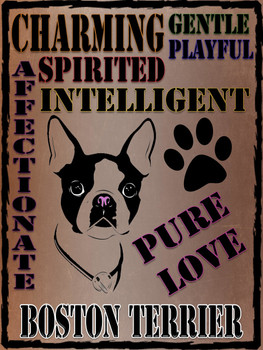 Boston Terrier Traits