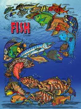 Underwater Fish Guide Metal Sign