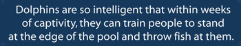 Dolphins -Intelligent