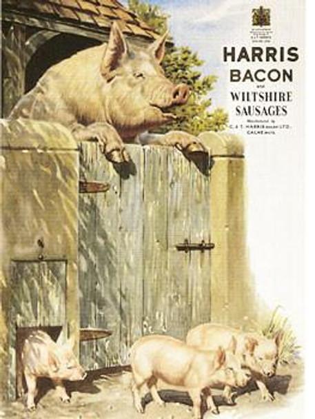 Harris Bacon
