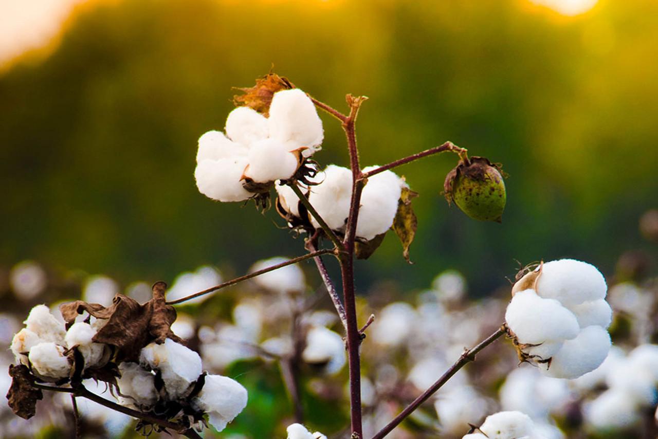 Sleep & Beyond 100% Organic Cotton Waterproof Mattress Protector Wool