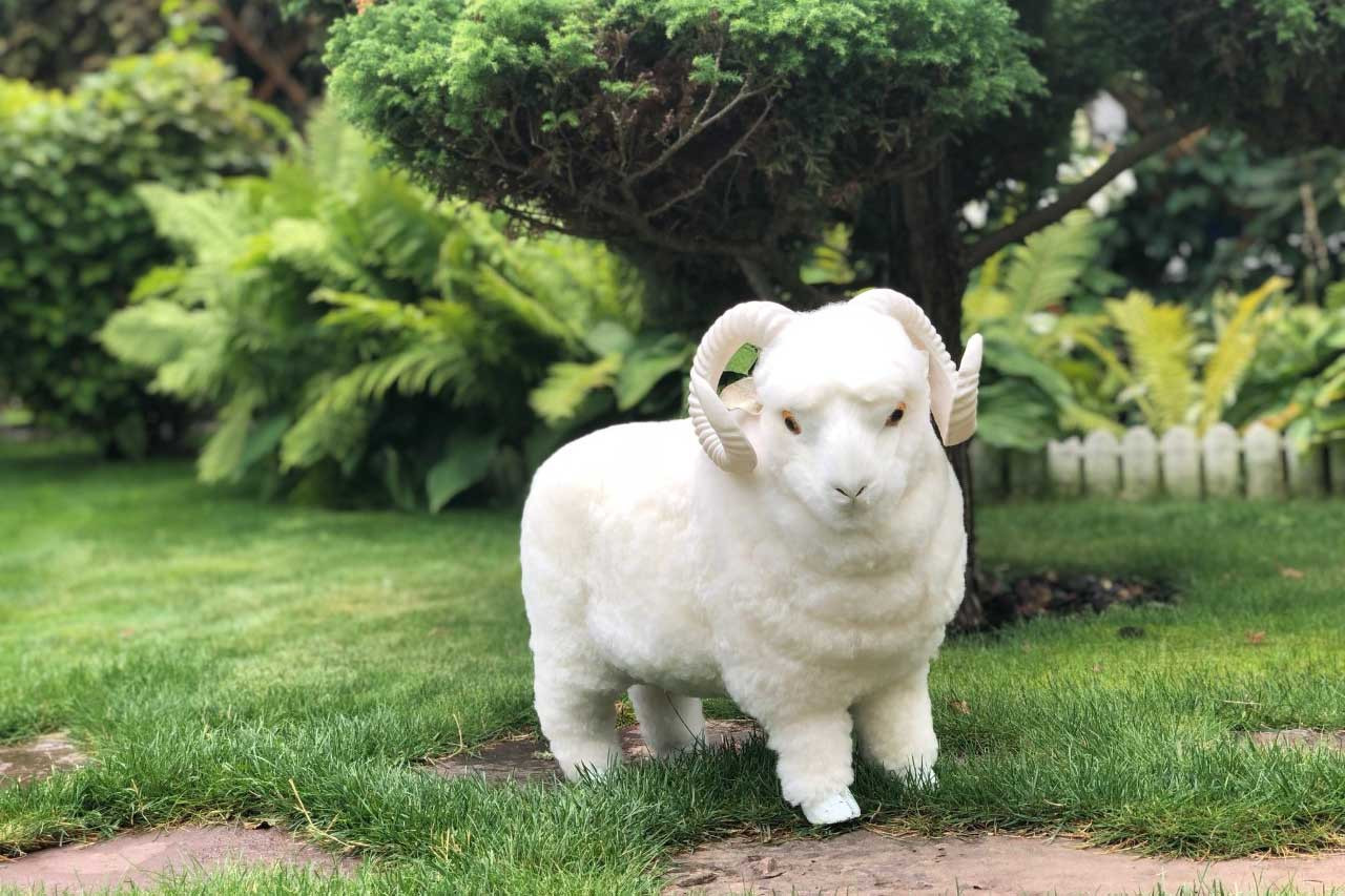 Cute CoCo The Merino