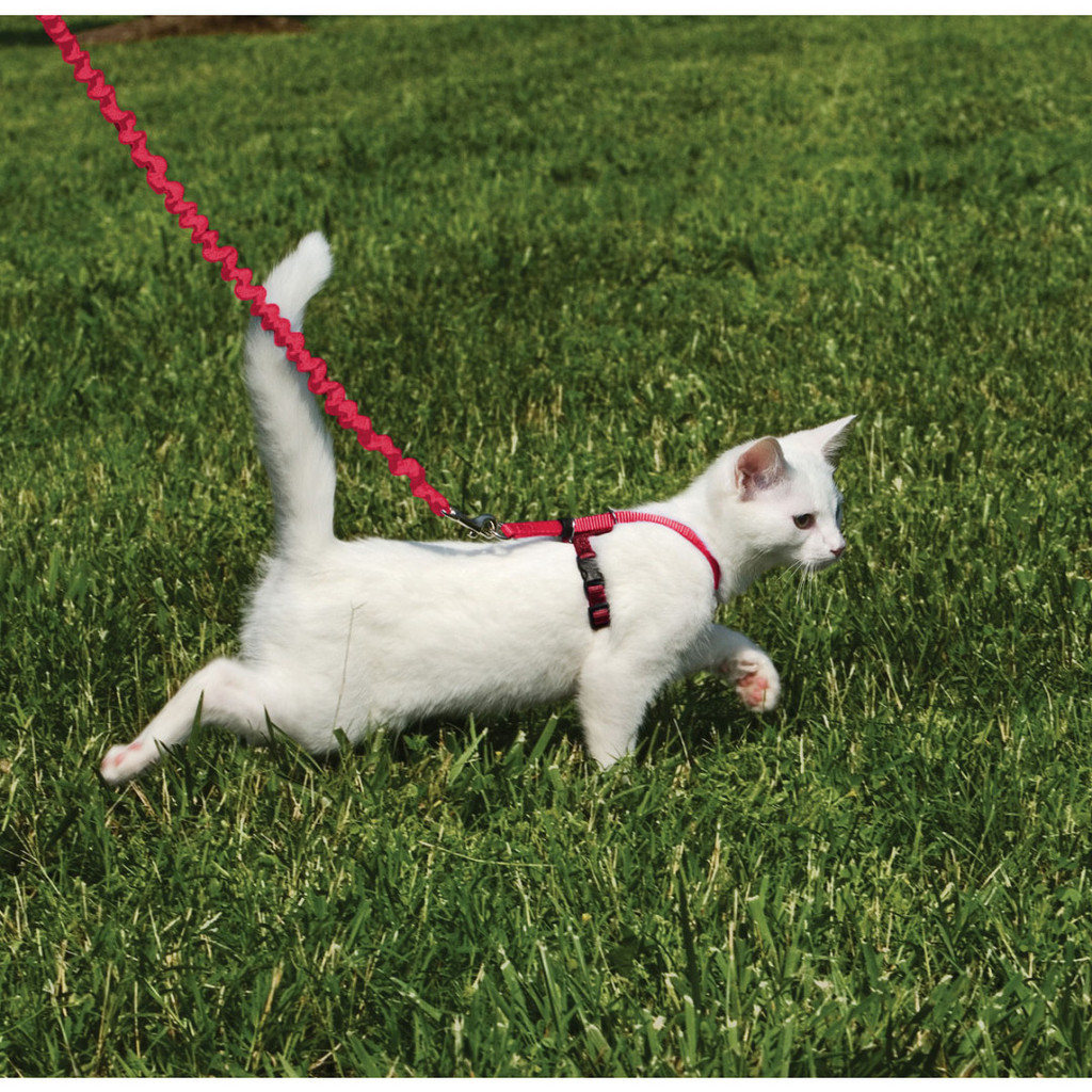 PetSafe COME WITH ME KITTY Cat Harness and Bungee Leash Red Large