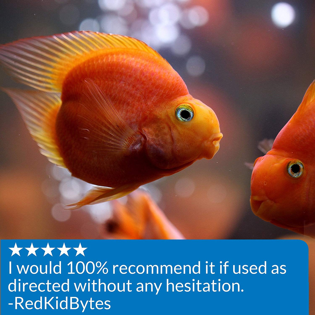 API AlgaeFix for Aquariums 16 Ounces