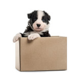Assorted Puppy Toy Box - 6 Assorted High Quality Name Brand Dog Toys