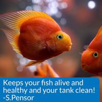 API Stress Zyme Freshwater & Saltwater Aquarium Cleaning Solution 32 oz Bottle