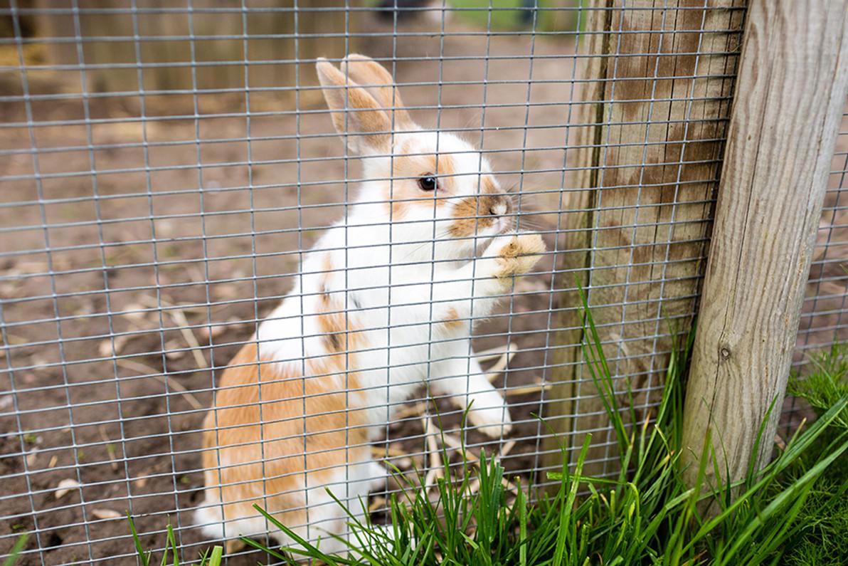 Rabbit Netting Installation