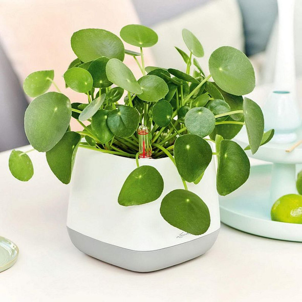 YULA Poly Resin Table Self-watering Planter