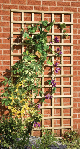 Traditional Square Trellis Panel (1830 x 915mm) - Pressure Treated Green Timber