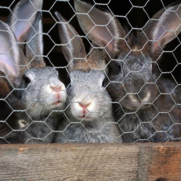 1050mm x 31 x 19 Gauge  Rabbit Netting (50m Roll)