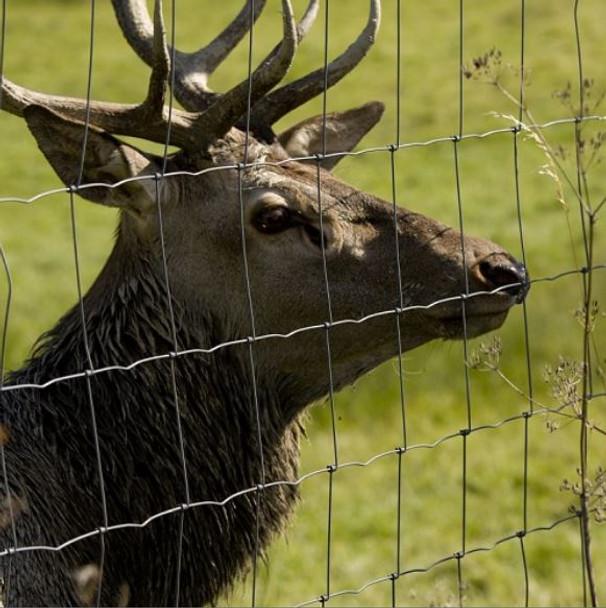 Deer Fence (2000mm) - L23/200/15 Galvanised 50 Metre Roll