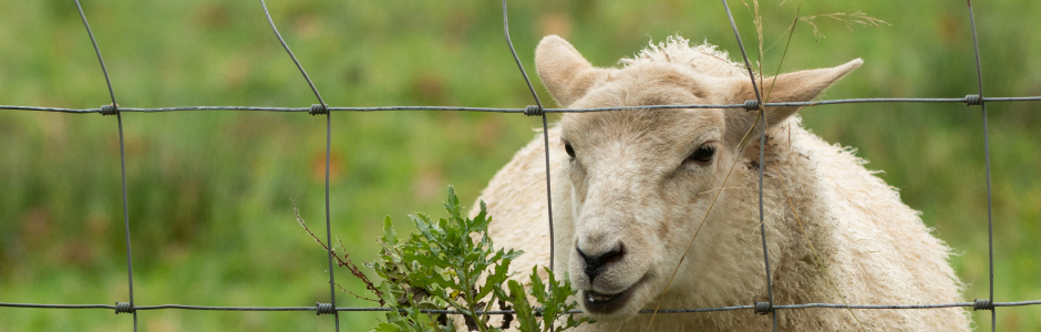 A Complete Guide To Livestock Fencing - AVS Fencing Supplies