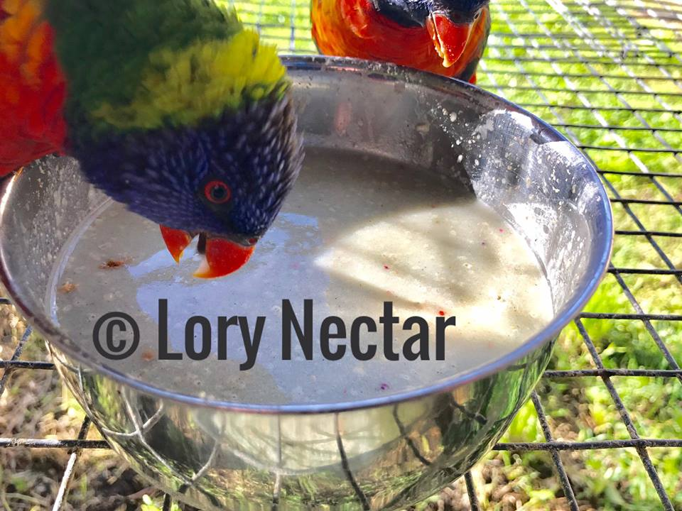 Lory Breeder Pair enjoying LoryNectar Breeder diet.