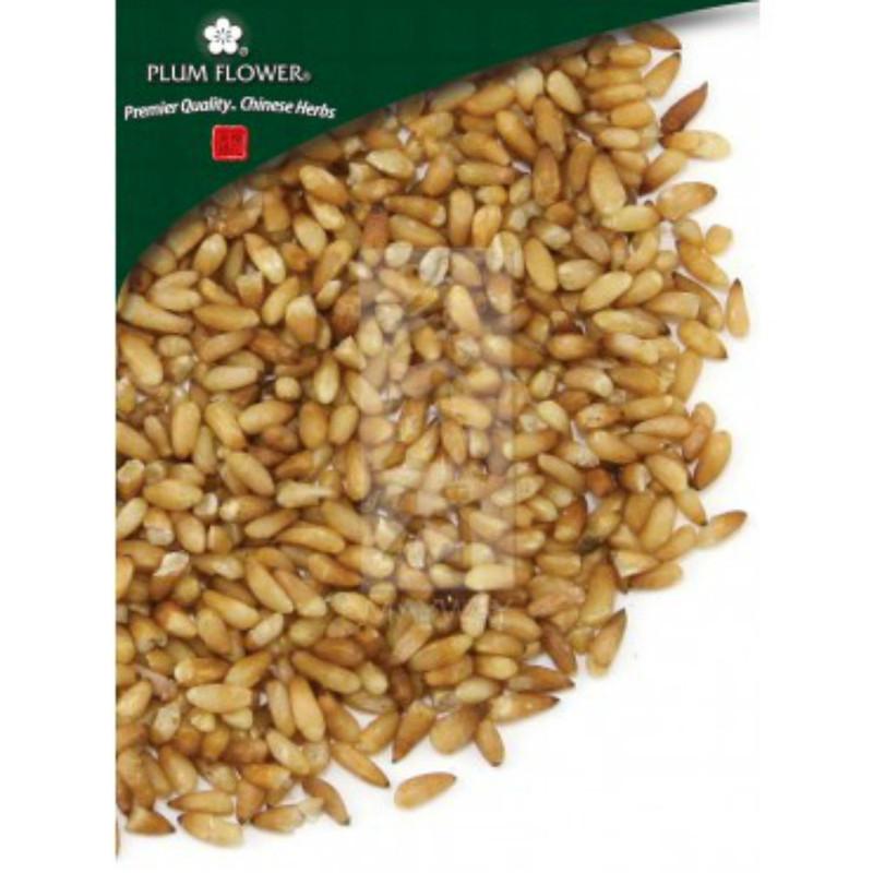 Biota Seed - Bai Zi Ren