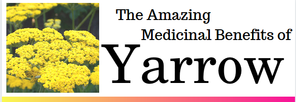 The Amazing Medicinal Benefits of Yarrow Flower