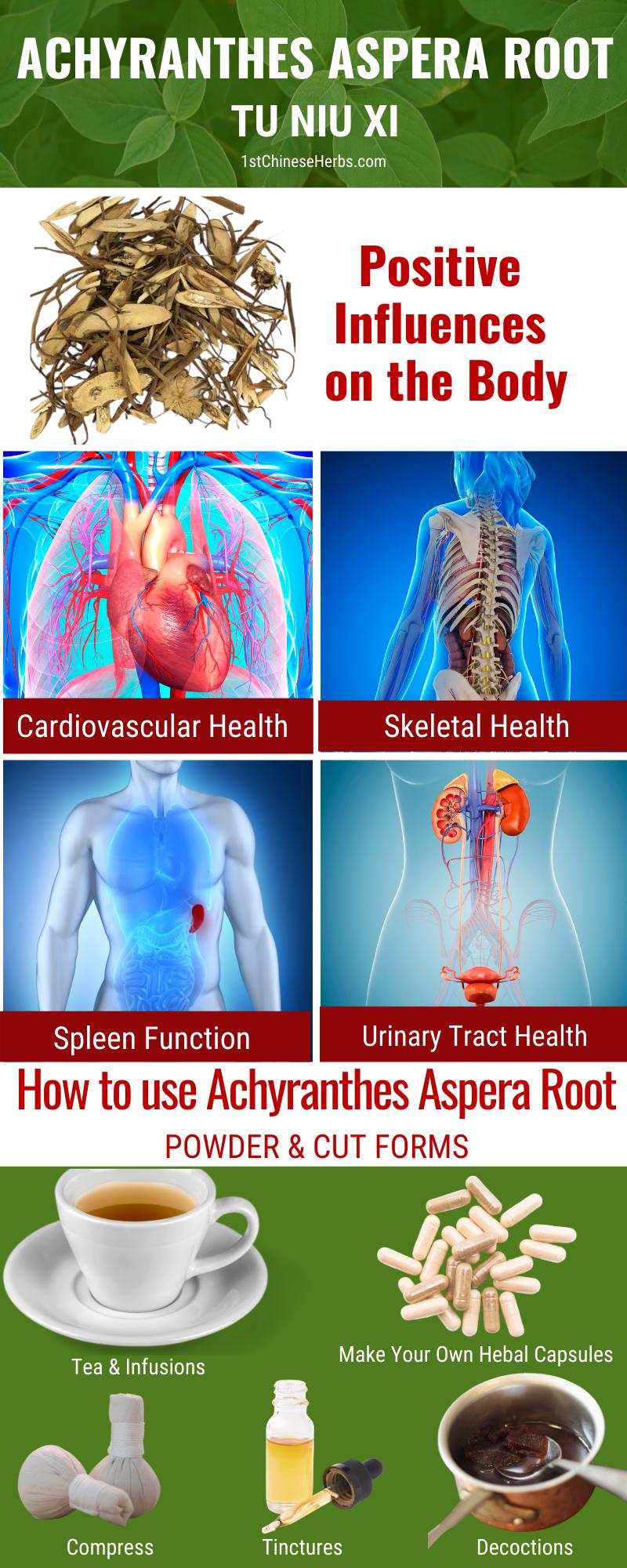 Achyranthes aspera root benefits, tu niu xi benefits, achyranathes aspera root uses, tu niu xi uses