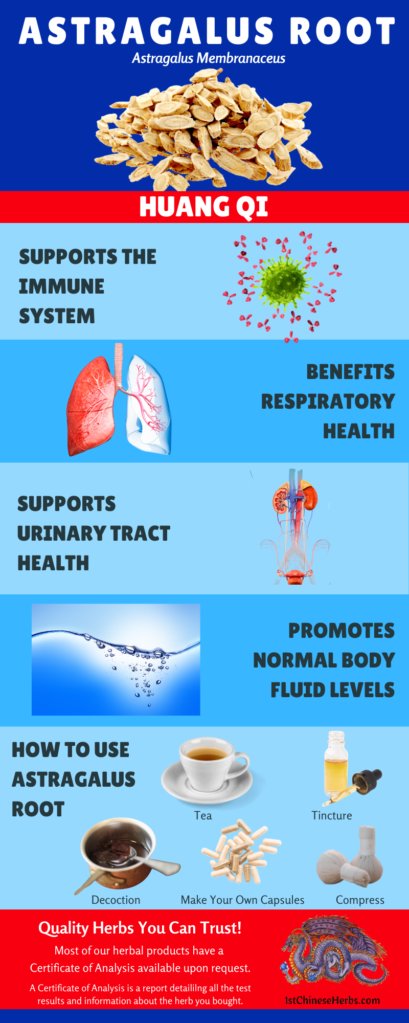 respiratory health astragalus root, urinary tract health astragalus root, immune support astragalus root, edema astragalus root